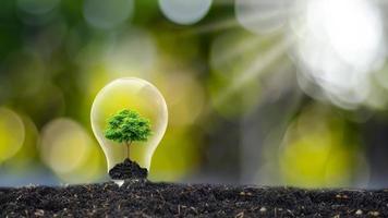árvores crescem em lâmpadas de economia de energia e ideias ambientais no Dia da Terra
