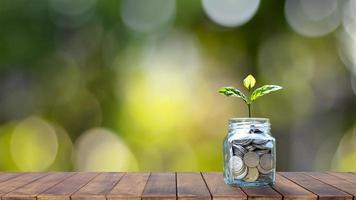 planta em crescimento em uma garrafa de dinheiro em uma mesa de madeira com bokeh. fundo verde borrado da natureza