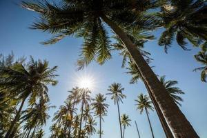 coqueiros e céu azul foto