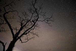 silhueta de uma árvore e céu estrelado