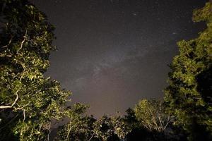 céu estrelado e árvores