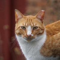 lindo gato de rua marrom