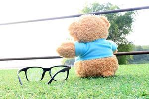 urso e óculos