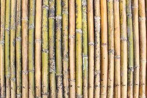 fundo de parede de bambu foto