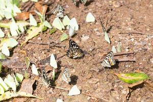 bando de borboletas no chão foto