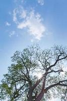 o céu atrás de uma grande árvore foto