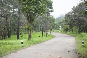estrada na floresta foto