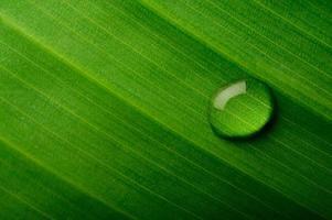 gota d'água em uma folha de bananeira foto
