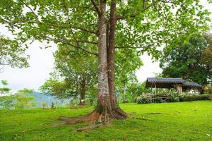 árvore no meio do gramado