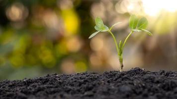 pequenas árvores com folhas verdes, crescimento natural e luz solar, o conceito de agricultura e crescimento sustentável de plantas