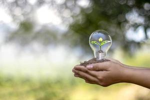mãos de pessoas segurando lâmpadas economizadoras de energia e pequenas árvores plantadas em lâmpadas de economia de energia e conceito ambiental
