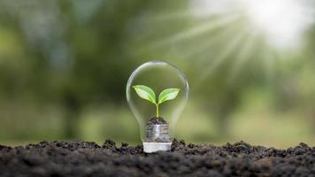 uma árvore crescendo em uma moeda em uma lâmpada além de um conceito ambiental e de economia de energia verde borrado de fundo natural