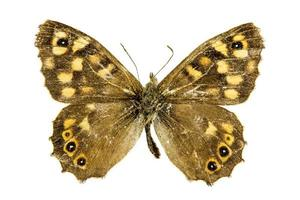 borboleta de madeira salpicada foto