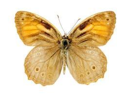 borboleta marrom treliça foto