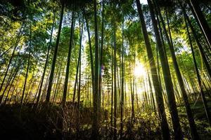 bela floresta de bambu em arashiyama, kyoto foto