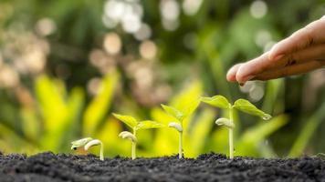 cultivo de safras em solo fértil e irrigação de plantas, incluindo estágios de crescimento da planta, conceitos de cultivo foto