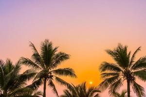 palmeiras no oceano foto