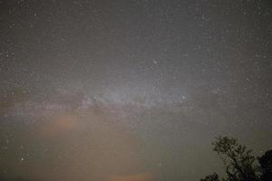 céu estrelado e copas de árvores