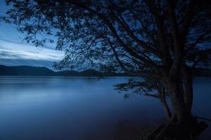 árvore perto de um rio à noite foto