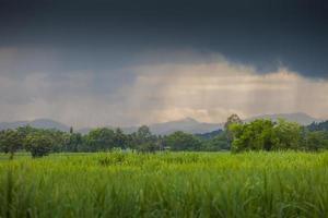 nuvens de chuva com um campo verde foto