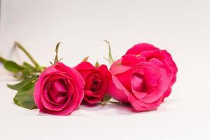 três rosas vermelhas foto