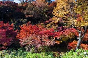 árvores coloridas em um parque foto