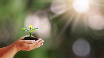 árvore que cresce em mãos humanas com fundo natural verde borrado, um conceito de crescimento de planta e proteção ambiental
