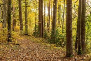 caminho de floresta colorido no outono com folhas caídas