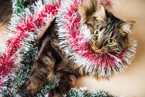 retrato de gato norueguês com guirlandas sob a árvore de Natal