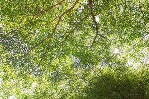 fundo de folha verde da natureza foto