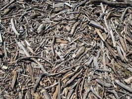madeira flutuante lavada em terra