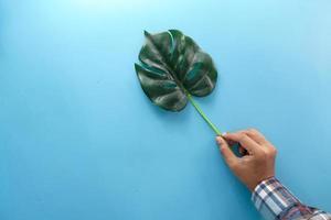 mão segurando uma folha de palmeira sobre fundo azul foto