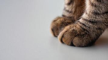 close-up de patas de gato em uma mesa branca