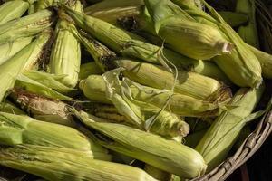 close up de milho com casca à venda em um mercado de fazendeiros foto