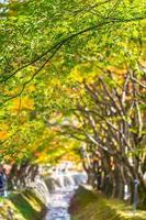 bela árvore de bordo no outono