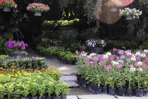 lindo viveiro de plantas