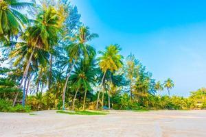 praia com palmeiras foto