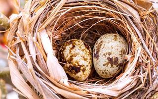ovos de pássaros salpicados