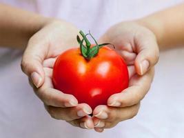 mãos segurando um tomate vermelho