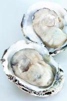 duas ostras frescas foto