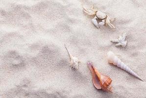 areia e conchas foto
