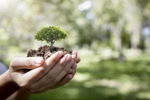 mãos segurando uma pequena árvore