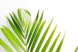 folha de palmeira verde foto