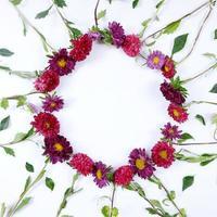 moldura circular do buquê de flores aster foto