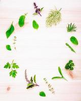 círculo de ervas frescas foto