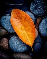 folha de laranja nas pedras foto