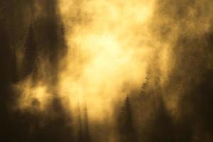 névoa colorida da floresta