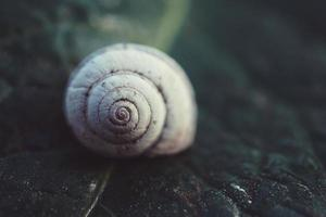 caracol branco na natureza foto