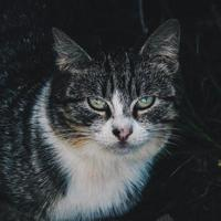 lindo retrato de gato de rua