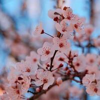 linda flor rosa na primavera foto